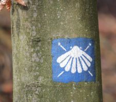 Trail sign Way of Saint James white scallop on blue ground