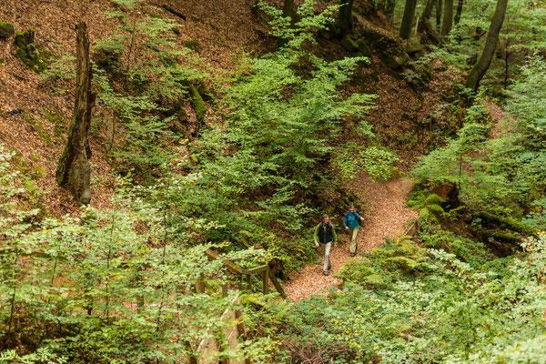 Sagenhafter Waldpfad Quality Hiking Trail
